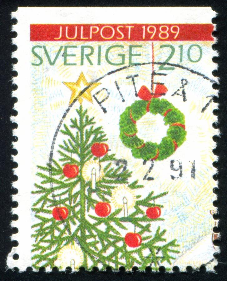 Верхняя часть рождественской елки стоковые изображения