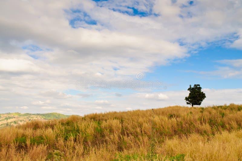 верхняя часть холма стоковое изображение rf