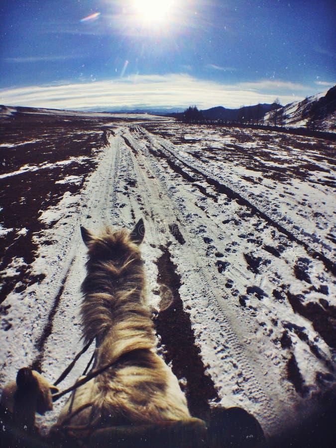 Верховая езда в национальном парке Gorkhi Terelj, Монголии стоковые изображения rf