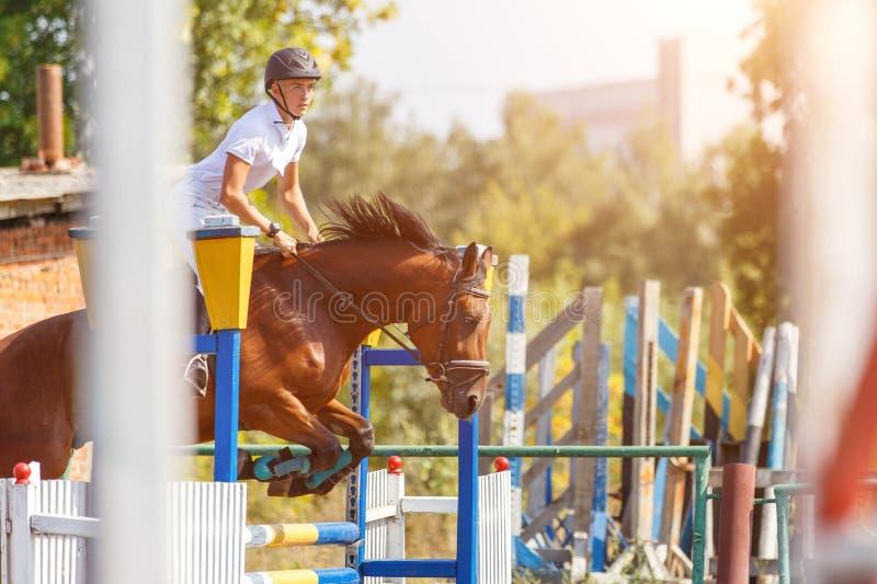 Верховая лошадь молодого человека на событии выставки скача стоковые фотографии rf
