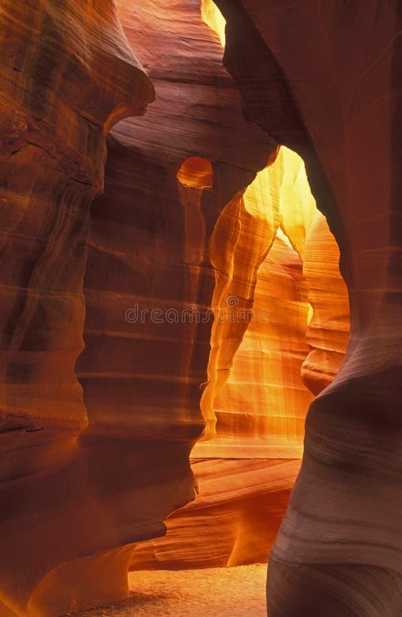 верхушка шлица каньона антилопы стоковые фотографии rf