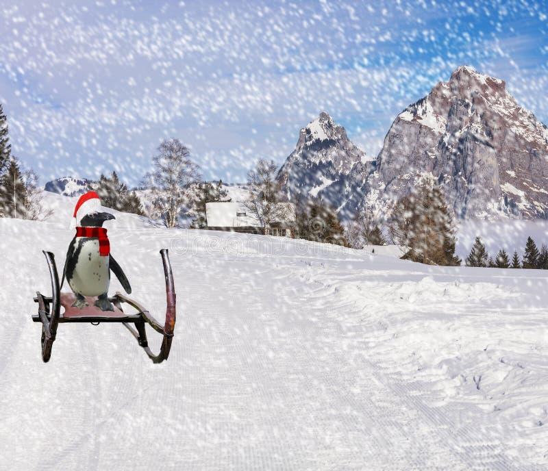 Веселое рождество смешной пингвин нося bonnet шарфа и Санта Клауса сползая вниз с наклона холма лыжи на сани во время холода стоковая фотография rf
