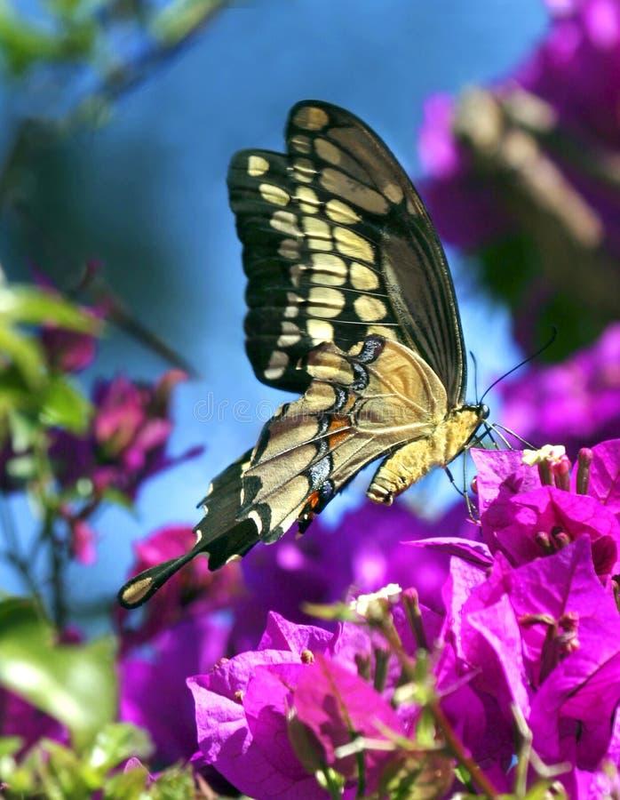 весеннее время бабочки стоковые изображения rf