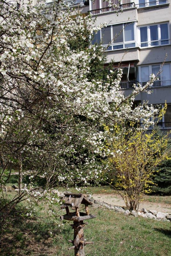 Весеннее время и зацветая дерево стоковая фотография