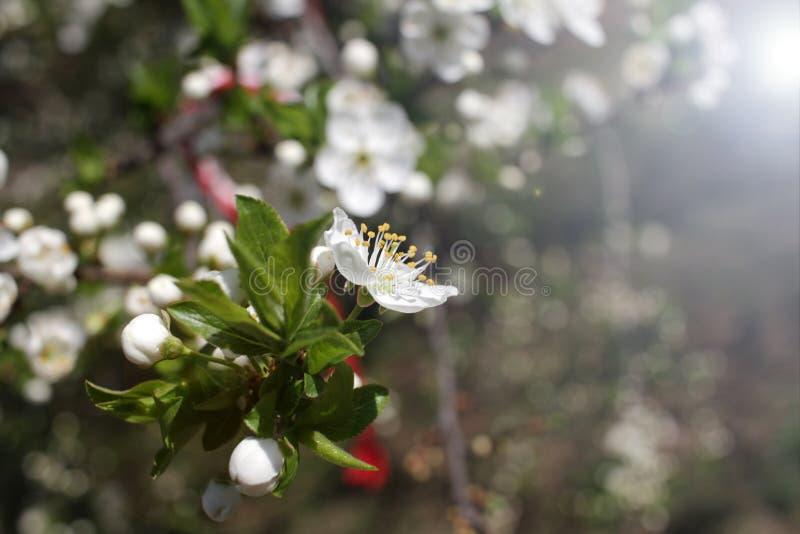 Весеннее время и зацветая дерево стоковое фото