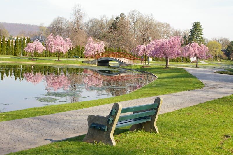 весеннее время парка стоковое изображение