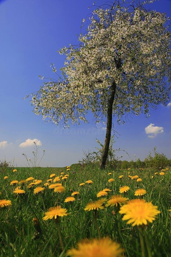 весеннее время стоковое изображение rf