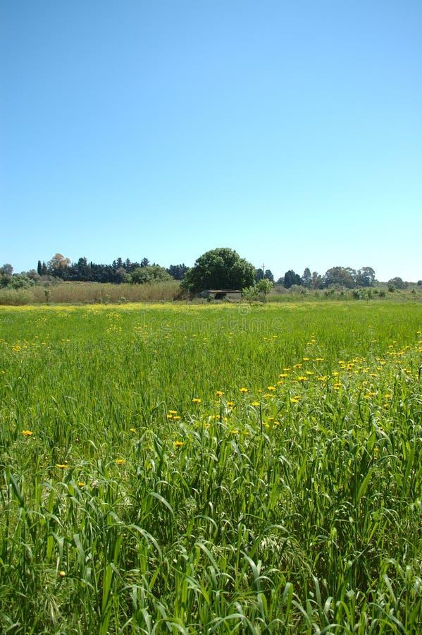 Весенний день стоковое изображение rf