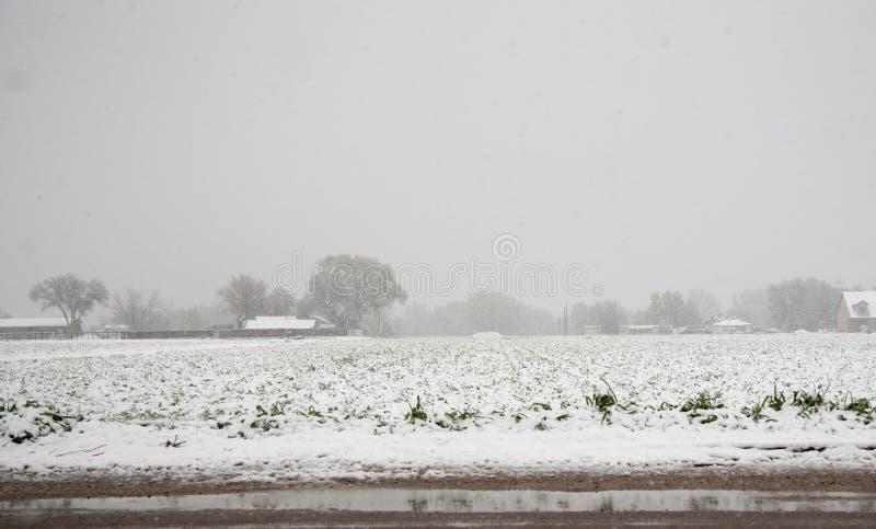 Весенний день Snowy стоковые фотографии rf
