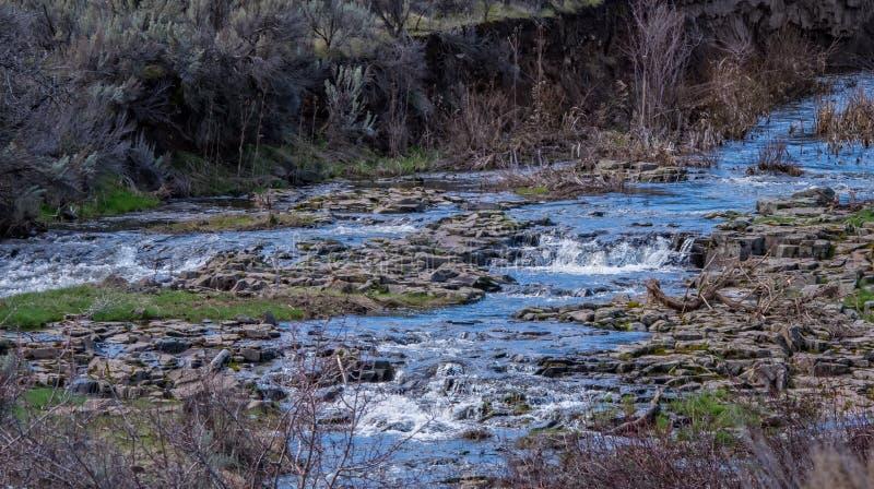 Весна бежит с потока n высокая пустыня стоковое фото rf