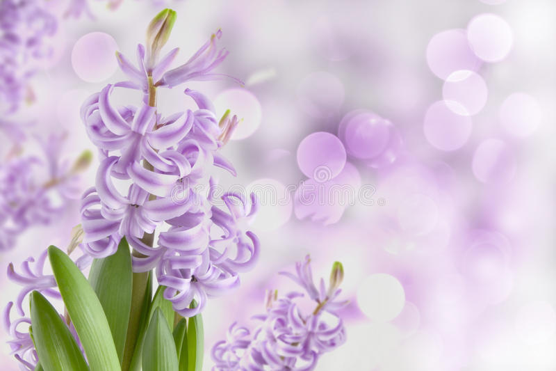 весна волшебства гиацинта сада стоковое изображение rf