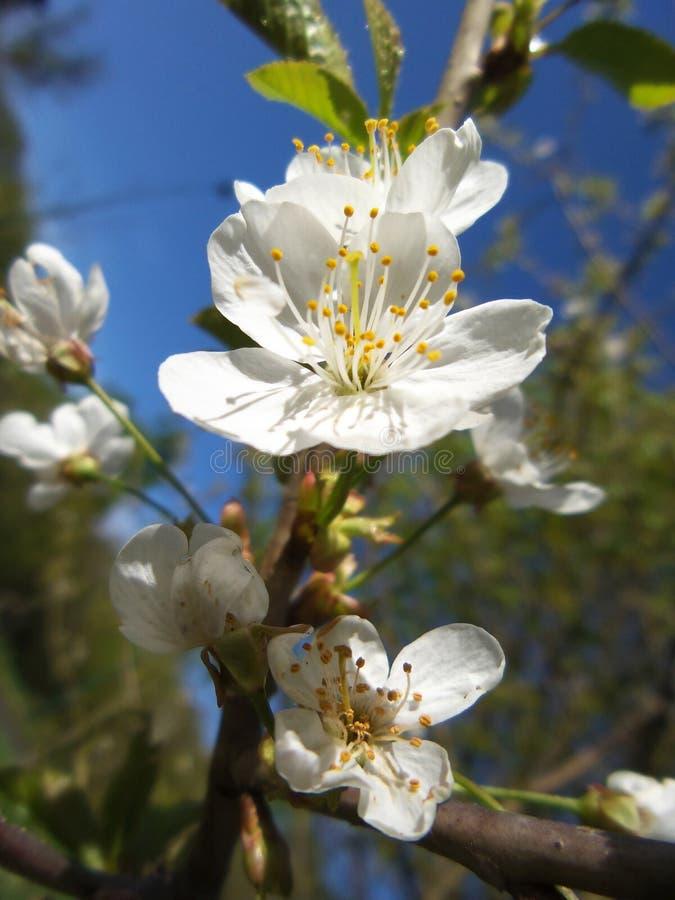 Весна вызывает стоковое фото