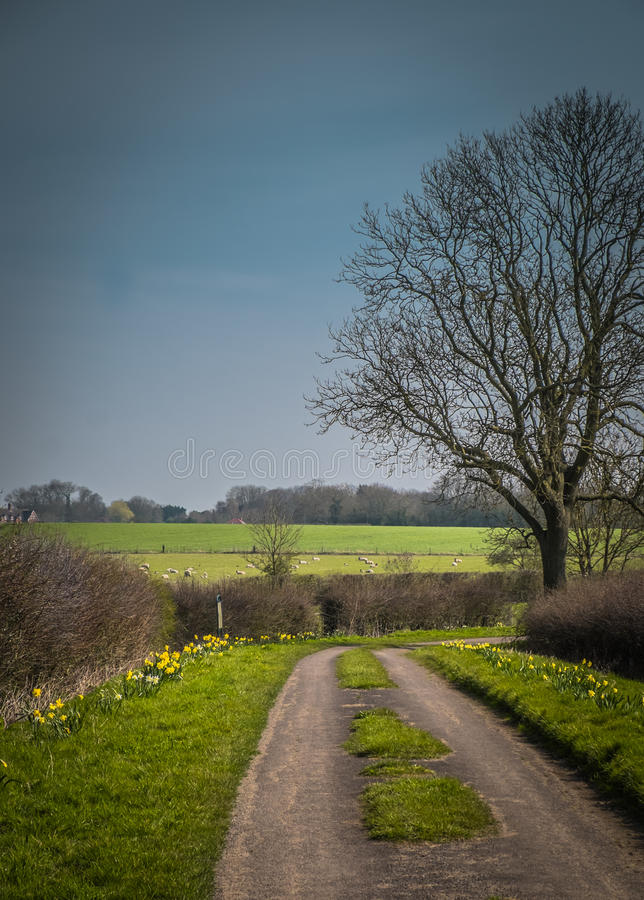Весна в английской майне страны стоковое фото rf