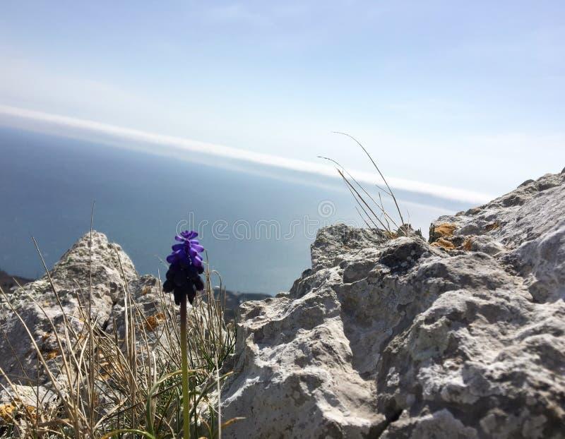 Весна в горах Крыма стоковые фото
