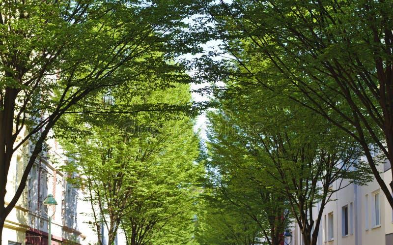 Весна в городе стоковое изображение rf