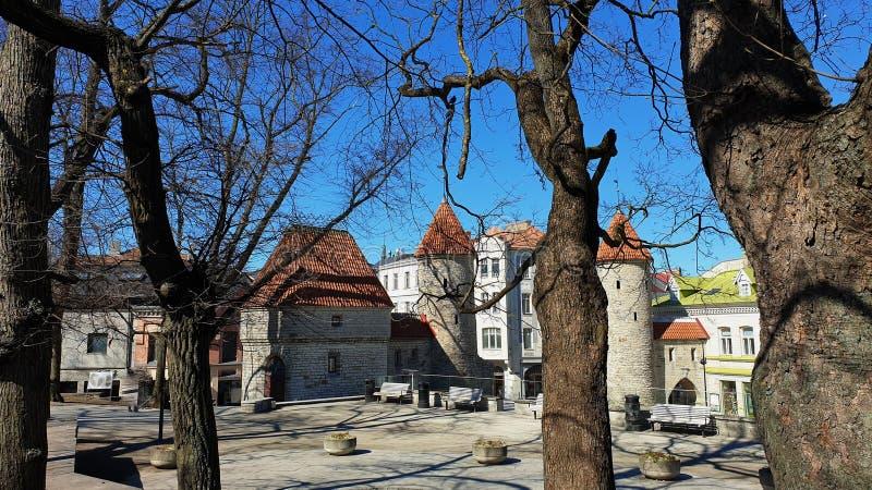 Весна в городке города старом башен древних городов Таллина и среднев стоковое фото rf