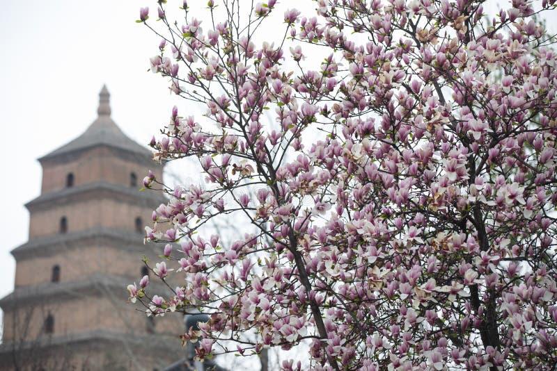 Весна в живописном месте пагоды Dayan, городе Сиань, провинции Шэньси, Ки стоковое изображение