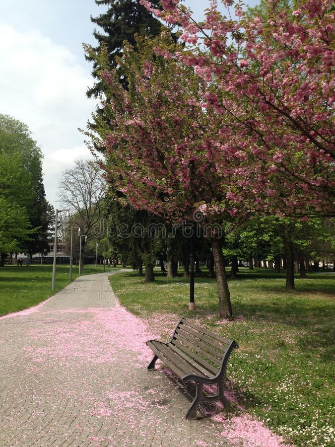 Весна в Италии стоковые фото