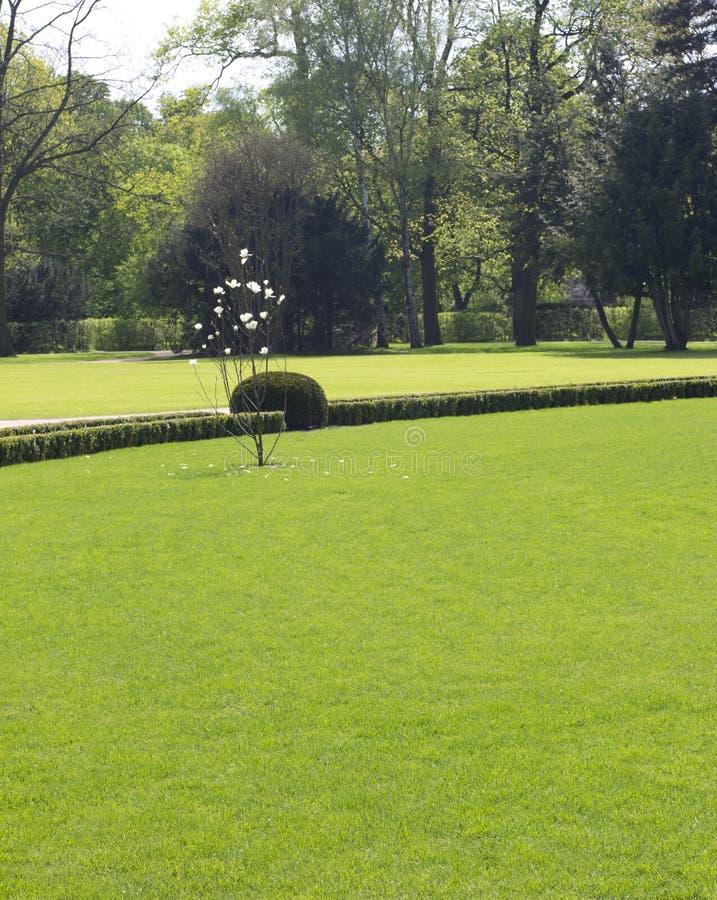 Весна в парке стоковые фотографии rf