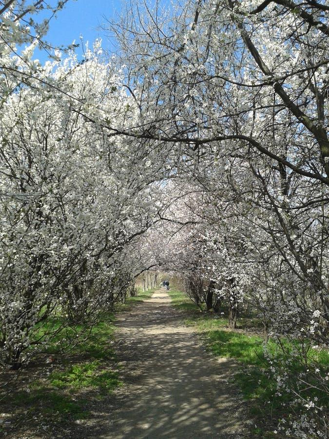 Весна в парке стоковая фотография