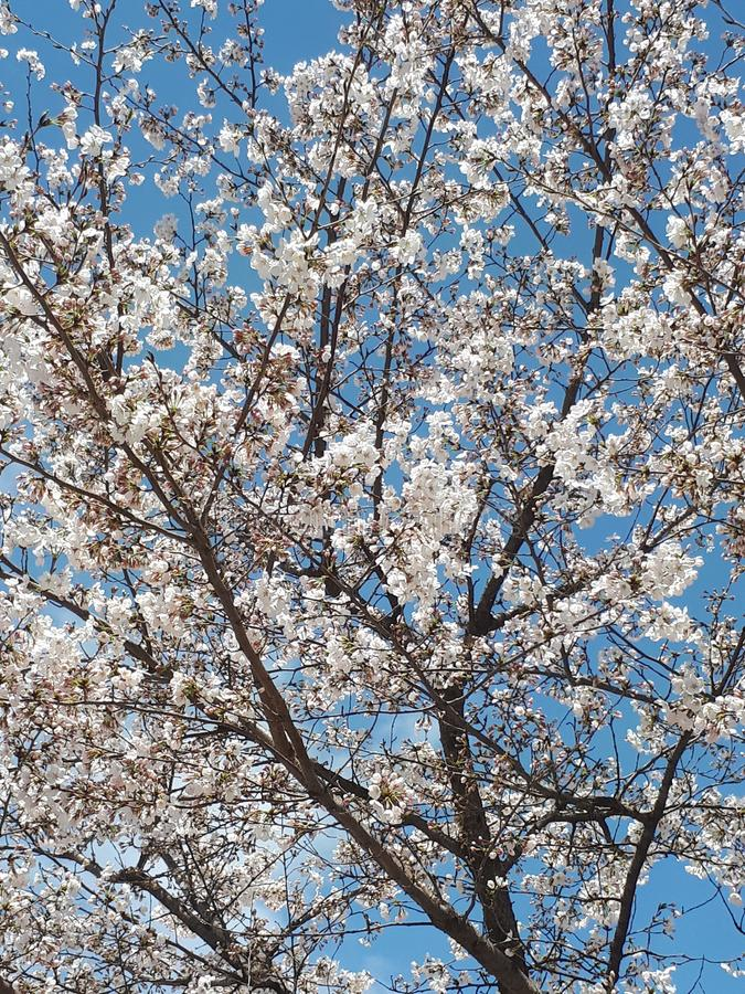 Весна в Сеуле & x28; Южное Korea& x29; стоковое фото