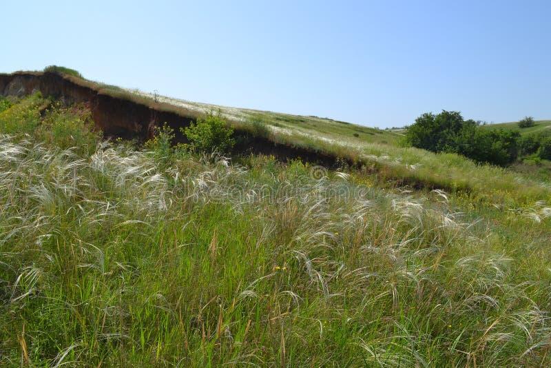 Весна в степи стоковое изображение
