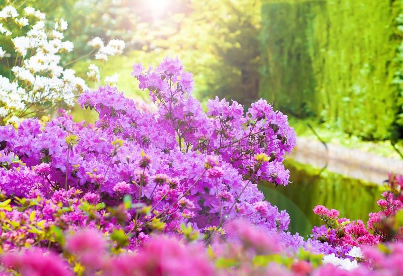Весна в Keukenhof стоковые изображения rf