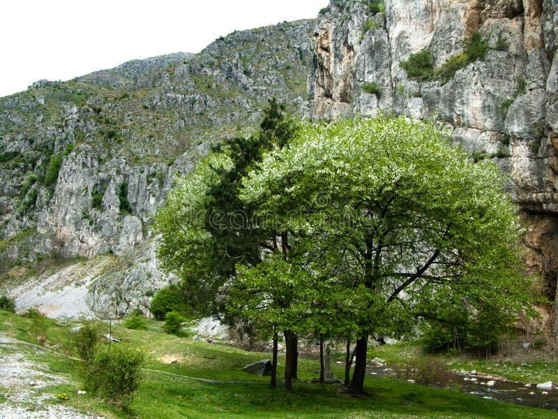 весна гор стоковая фотография