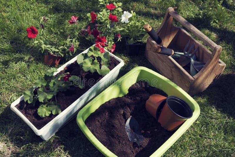 Весна засаживая инструменты цветков садовничая стоковые фотографии rf