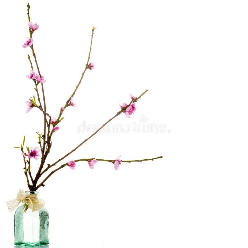 Весна, зацветая изолированная ветвь дерева стоковое фото