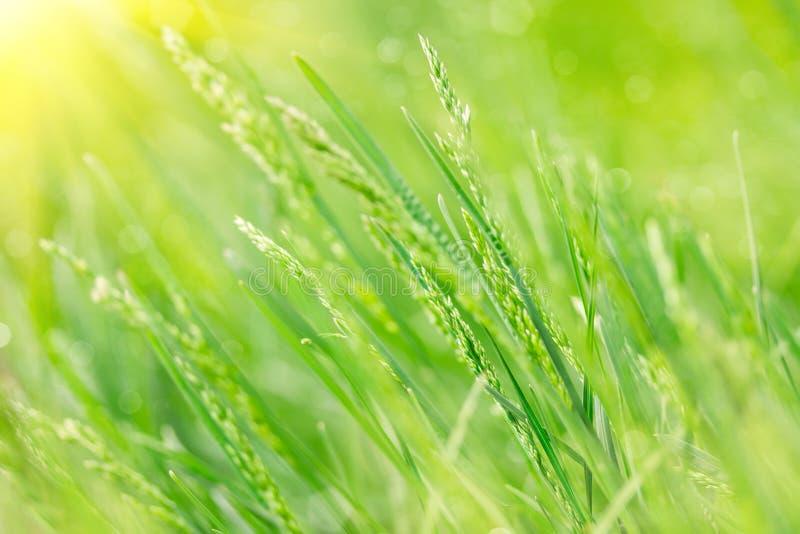 Download весна зеленого цвета травы стоковое изображение. изображение насчитывающей трава - 40579105