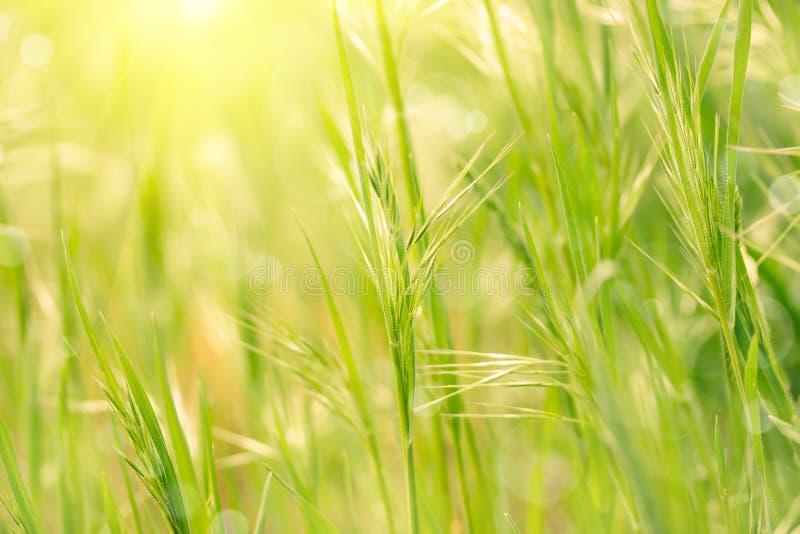 весна зеленого цвета травы стоковая фотография rf