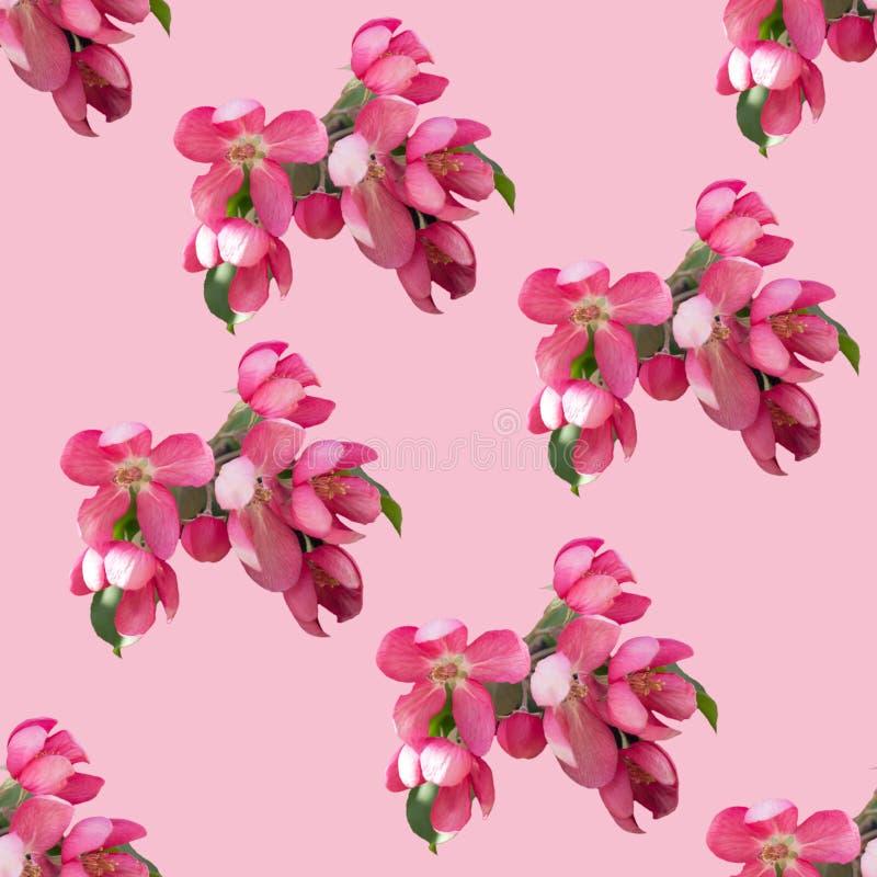 весна картины цветков безшовная иллюстрация вектора