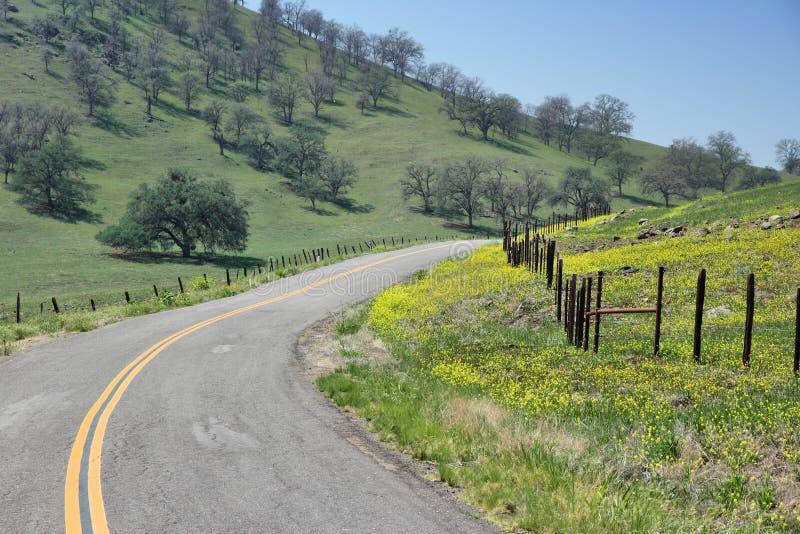 Весна Калифорнии стоковые фотографии rf