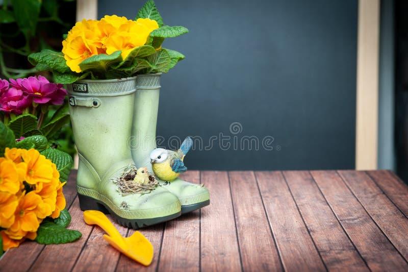 Весна концепции засаживая на балконе, в доме, сработанности и красоте Primula цветков красный и желтый и садовые инструменты, стоковое фото
