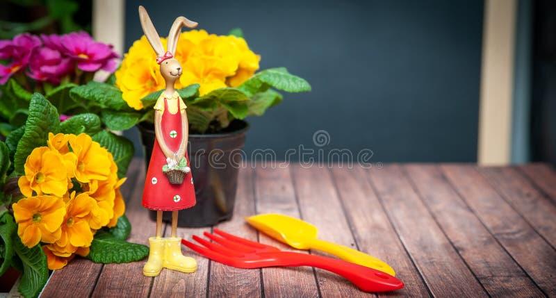 Весна концепции засаживая на балконе, в доме, сработанности и красоте Primula цветков красный и желтый и садовые инструменты, стоковые фотографии rf