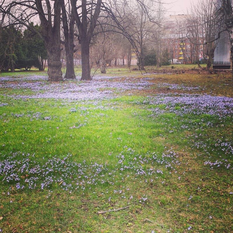 Весна Москвы стоковая фотография rf