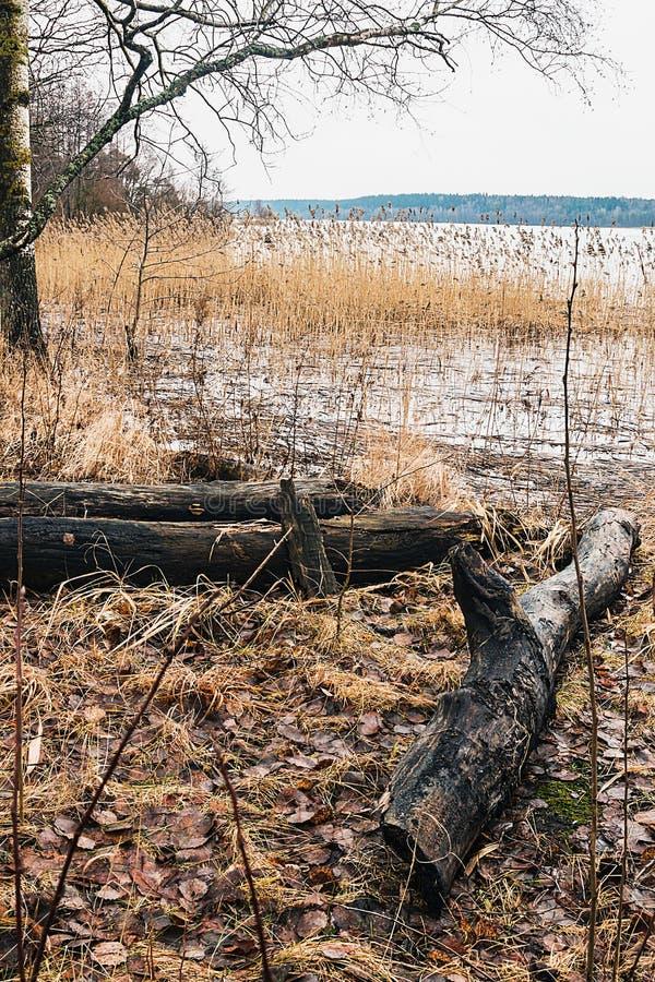 Весна на берегах леса озера стоковое фото