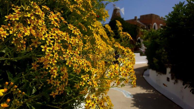 Весна на Крите стоковые фотографии rf