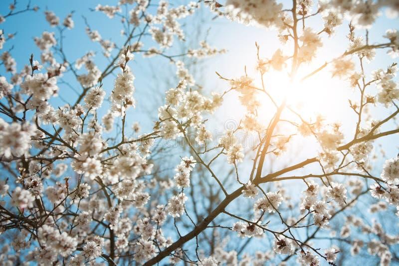 весна неба предпосылки стоковое изображение rf