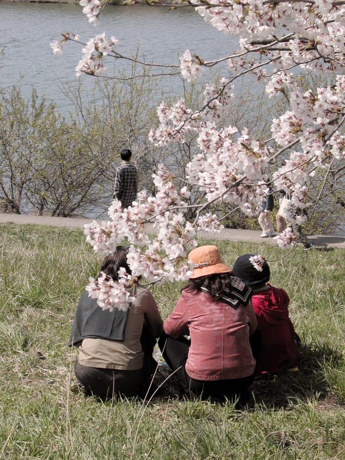 весна отдыха стоковые изображения