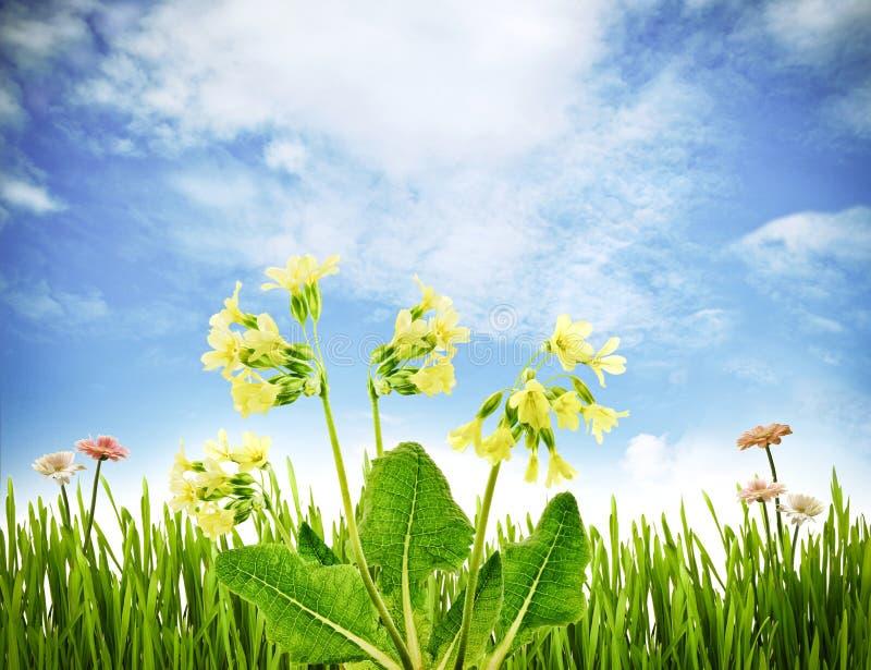 весна первоцветов стоковое изображение