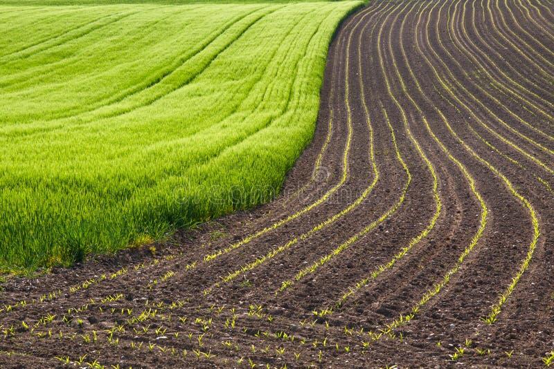 весна полей стоковые изображения