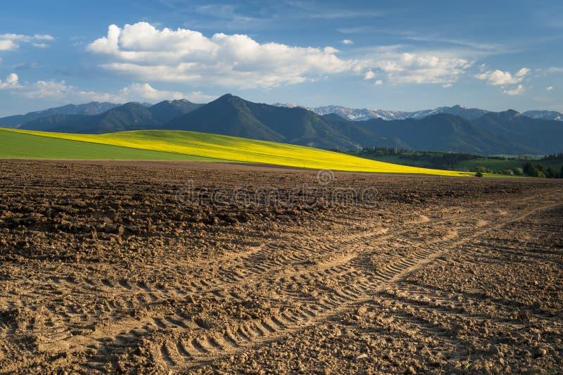 весна полей стоковая фотография rf