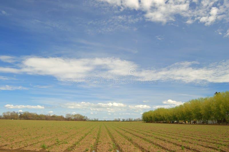 весна поля стоковое фото