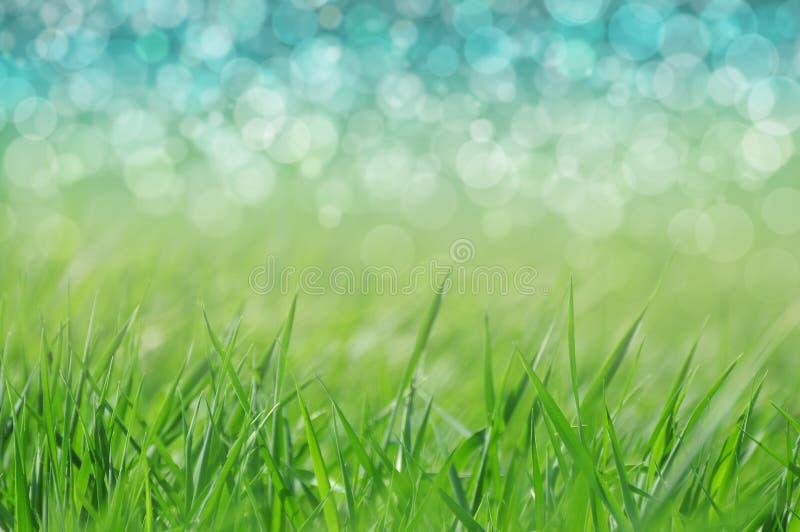 Весна/предпосылка праздника стоковые фотографии rf