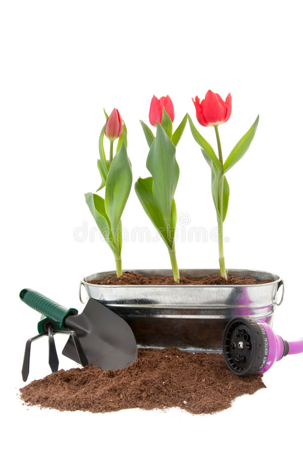 весна приготовления уроков стоковое фото rf