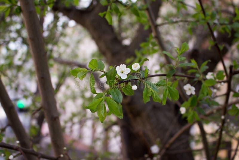 Весна просыпает вверх стоковое фото