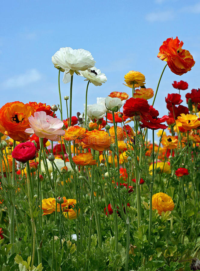 Весна путь природы говорить позволила нам Party! стоковая фотография rf