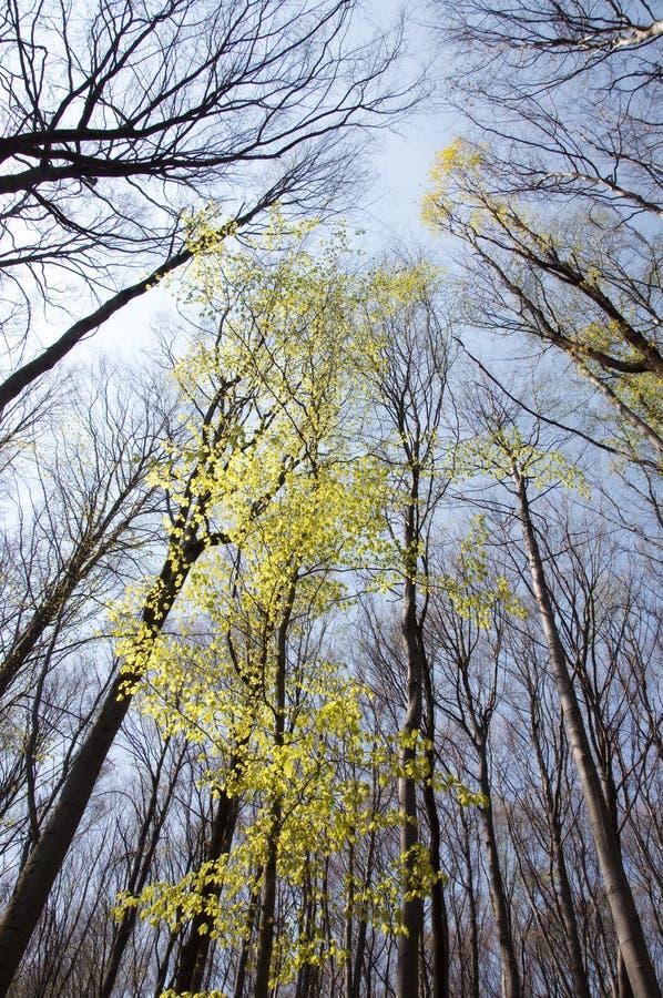 весна пущи стоковое изображение rf
